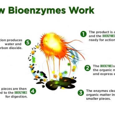 How Bioenzymes Work