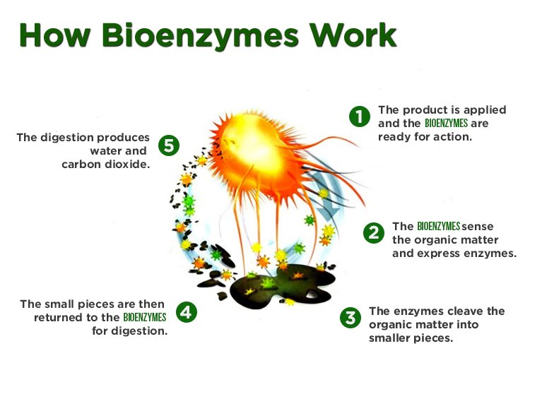How Bioenzymes Work
